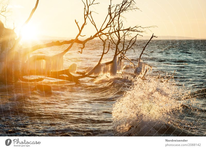 Winter at the Baltic Sea Vacation & Travel Beach Ocean Waves Winter vacation Nature Landscape Elements Water Sun Climate Beautiful weather Wind Ice Frost Tree