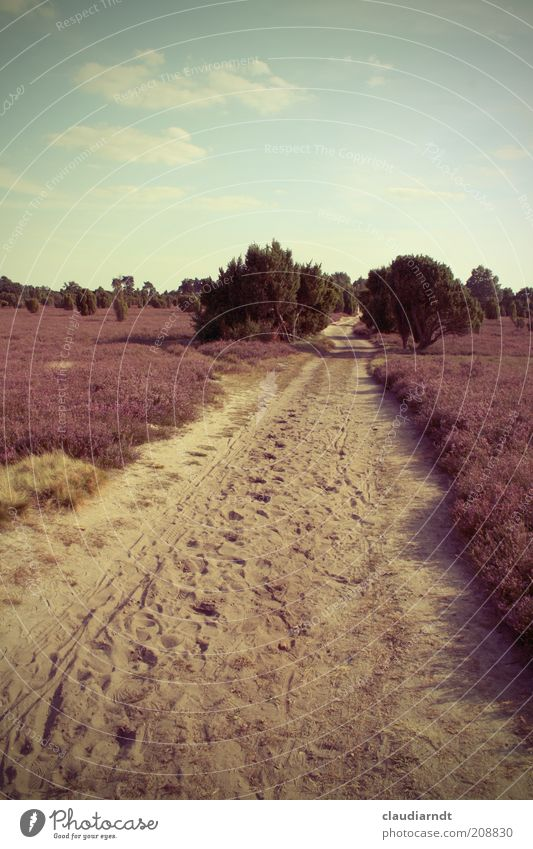 Nature Sky Flower Plant Summer Calm Far-off places Blossom Lanes & trails Sand Landscape Hiking Bushes Violet Tracks Dry