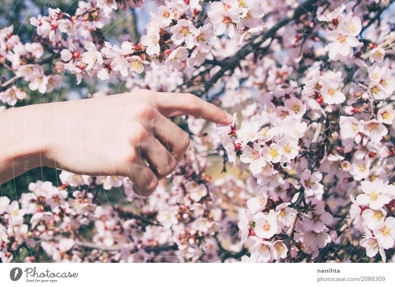 Man's hand touching almond flowers Human being Nature Youth (Young adults) Beautiful Young man Tree Hand Flower 18 - 30 years Adults Environment Life Lifestyle