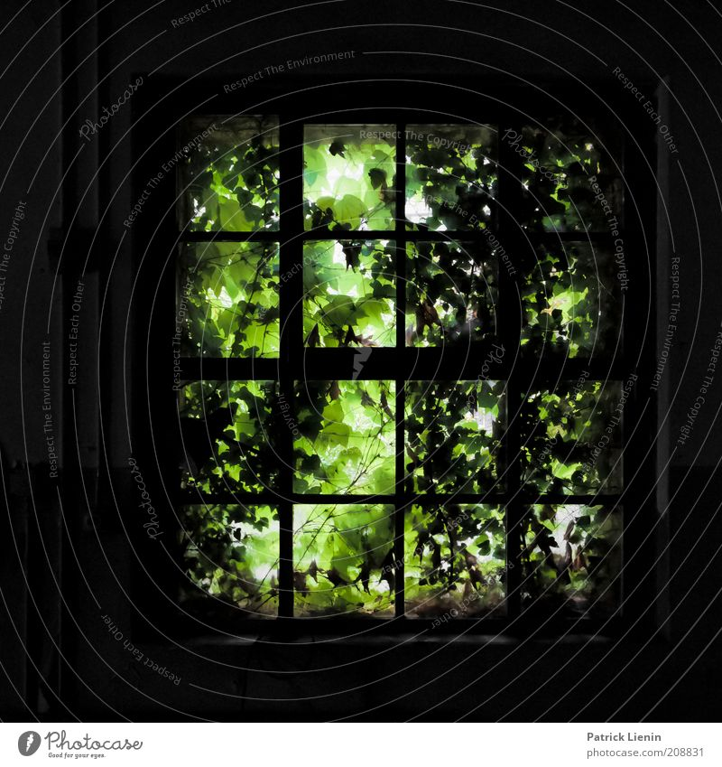 Old Green Calm Dark Wall (building) Window Wall (barrier) Building Fear Architecture Crazy Factory Wild Creepy Derelict Discover