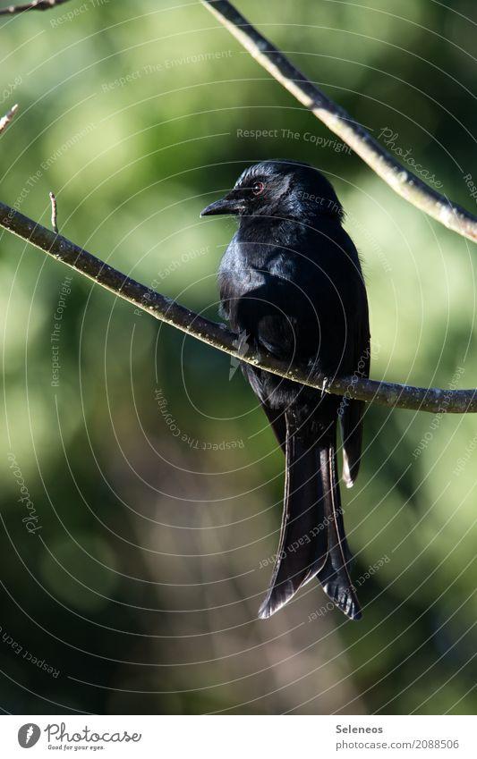 Nature Animal Black Environment Natural Garden Bird Park Wild animal Branch Near Animal face Ornithology