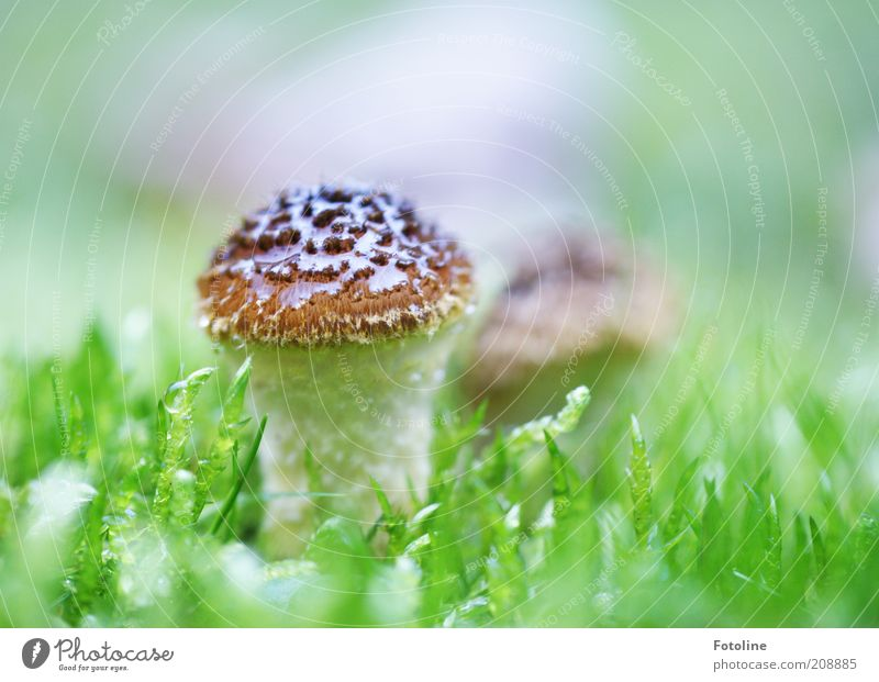 mushroom Environment Nature Plant Elements Earth Summer Meadow Bright Wet Natural Brown Green White Mushroom poisonous mushroom Colour photo Multicoloured