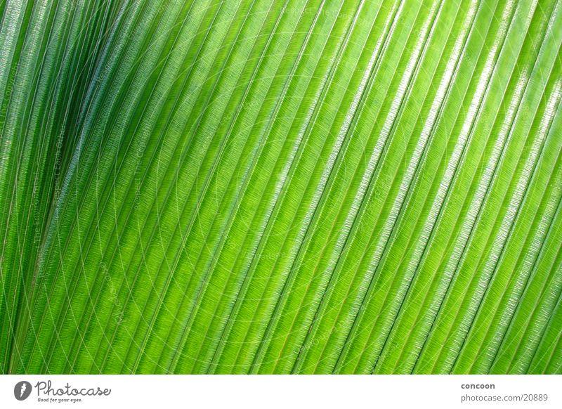 Nature Green Black Glittering Asia Progress Accuracy Singapore Palm frond