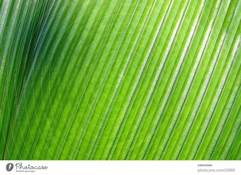 Pure structure Palm frond Accuracy Green Black Progress Pattern Glittering Singapore Detail Structures and shapes Nature