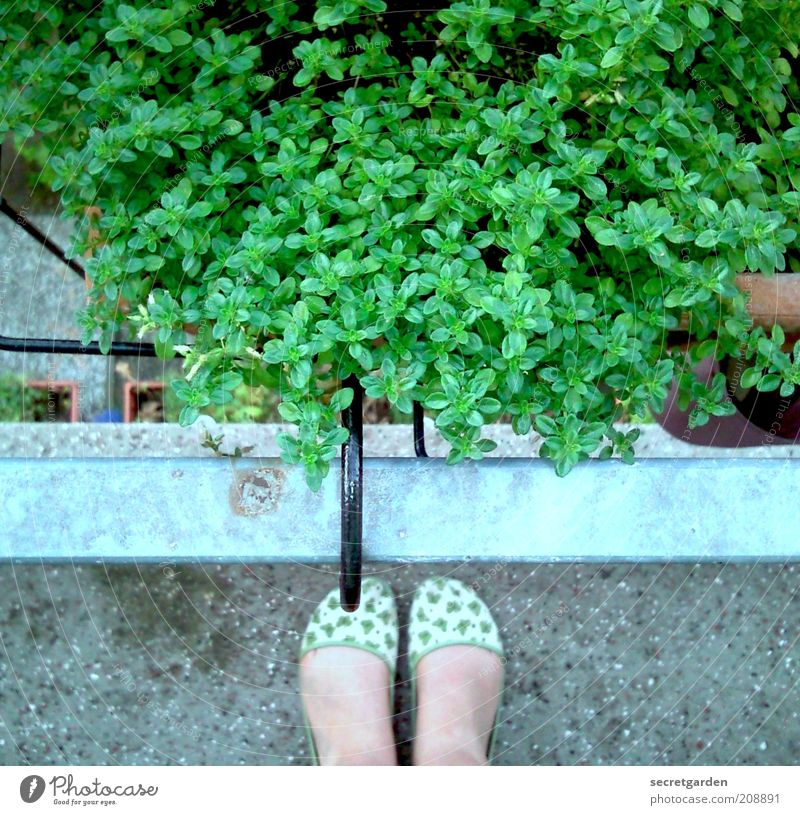 The innocence of the land. Leisure and hobbies Gardener Summer Living or residing Balcony Feminine Woman Adults Feet 1 Human being Plant Foliage plant Slippers