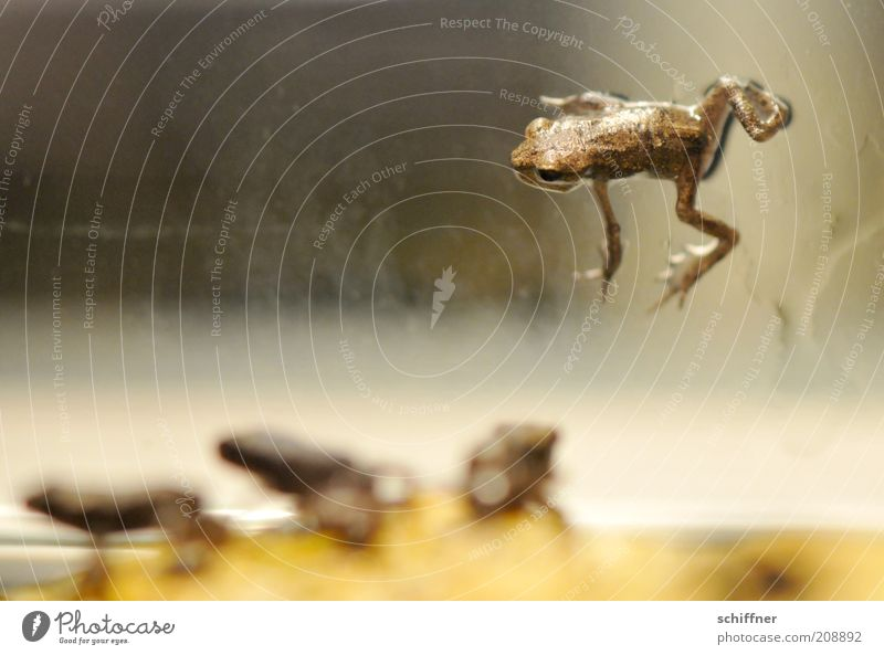 D'Artagnan and the Three Musketeers Animal Frog 4 Group of animals Baby animal Crouch Small Barred Individual loner Looking Close-up Offspring Dominant