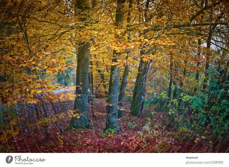 autumn forest Trip Environment Nature Landscape Autumn Tree Deciduous forest Autumn leaves Autumnal Autumnal colours Autumnal landscape Park Forest Beautiful