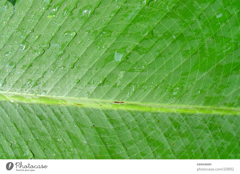 Green Leaf Rain Drops of water Wet Asia Damp Leaf green Singapore Horticulture Botanical gardens