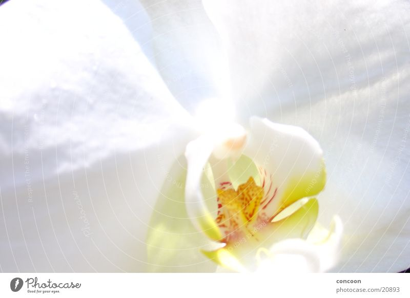 flowers Orchid Flower White Accuracy Blossom Pure Fresh Plant detailed Bright Clarity Orchid Garden Singapore