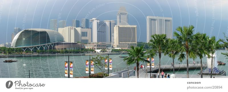 Palms & Skyscrapers Summer Avenue Gorgeous Vacation mood Town Ocean Thailand Singapore Los Angeles Sun Exotic Skyline Blue River merlion