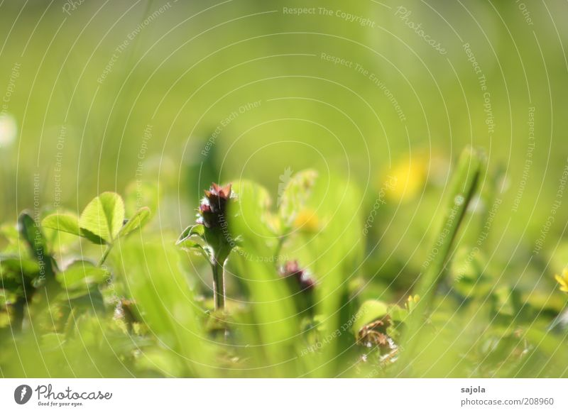beetle perspective Environment Nature Plant Spring Grass Foliage plant Lawn Green Perspective Colour photo Exterior shot Close-up Macro (Extreme close-up)