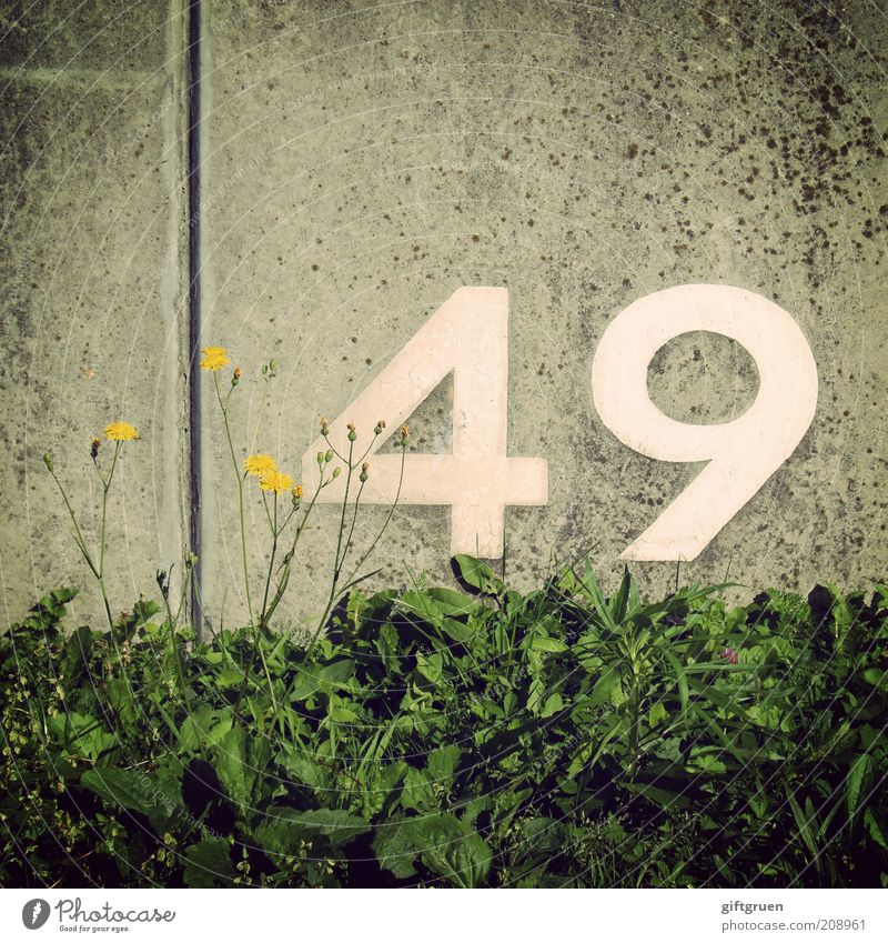 White Flower Plant Leaf Yellow Wall (building) Blossom Grass Gray Birthday Concrete Arrangement Characters Digits and numbers Sign Row