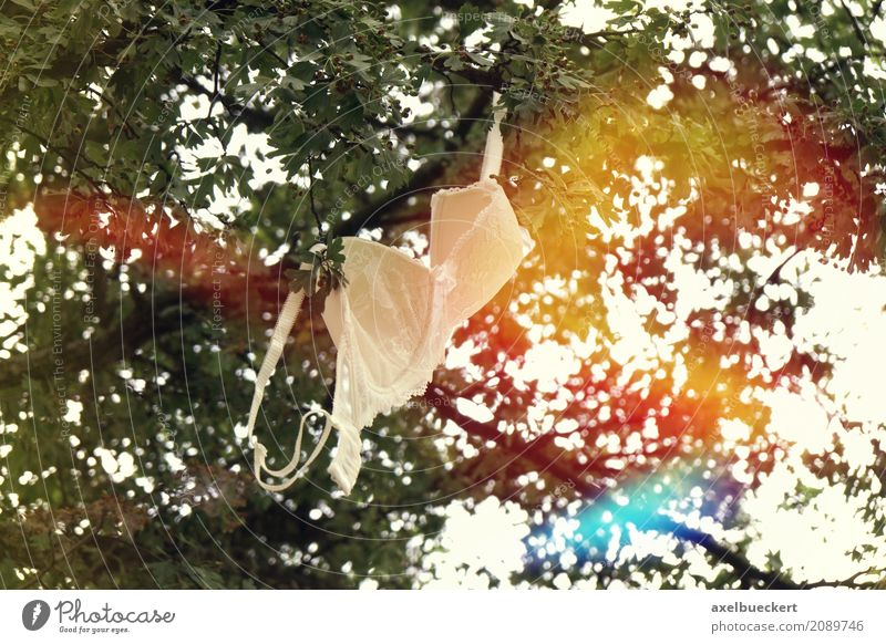 bra in tree Underwear Bizarre Freedom Joy Emancipation Absurdity Lens flare Tree Branch Hang Symbols and metaphors concept Summer Extract Eliminate Colour photo