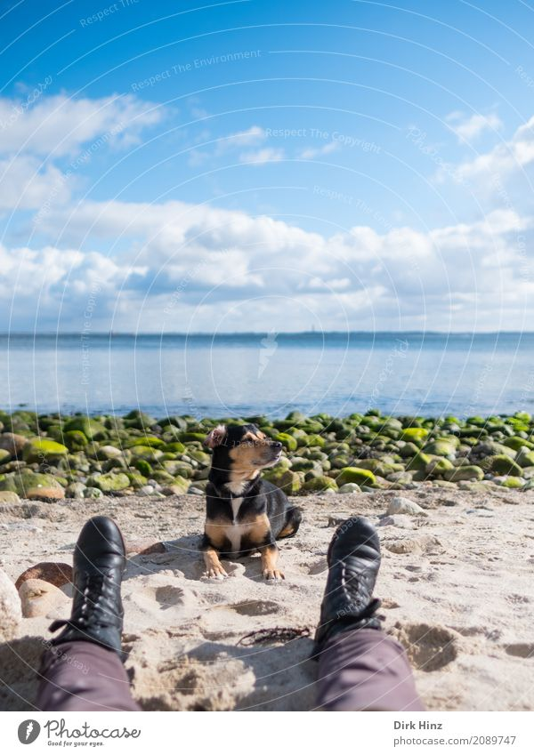 rest 1 Human being Environment Nature Landscape Water Coast Beach Baltic Sea Ocean Animal Pet Dog Maritime Natural Blue Stone Pebble beach Break Walk the dog