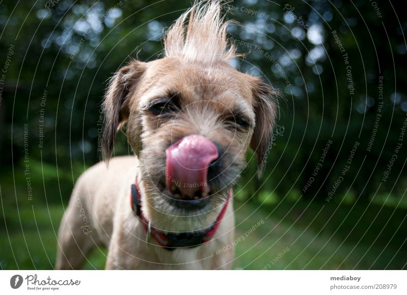 Nature Summer Animal Dog Park Funny Brown Nose Exceptional Uniqueness Cute Cleaning Brunette Whimsical Pet