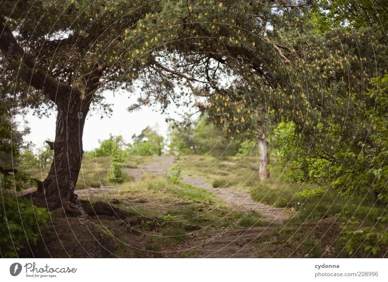 Nature Green Tree Summer Calm Forest Relaxation Life Freedom Landscape Environment Lanes & trails Dream Time Natural Uniqueness