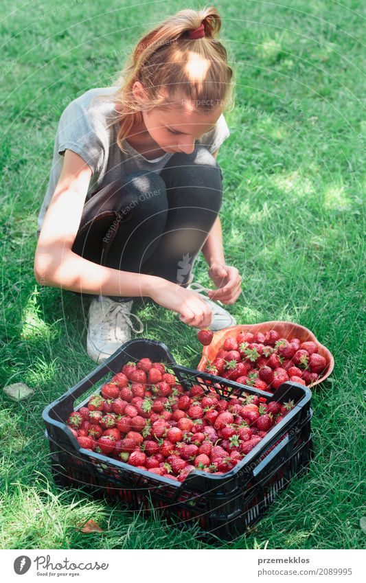 Girl putting freshly picked strawberries to a bowl Fruit Bowl Summer Garden Child 1 Human being Nature Fresh Natural Juicy Green Red Berries box food Harvest