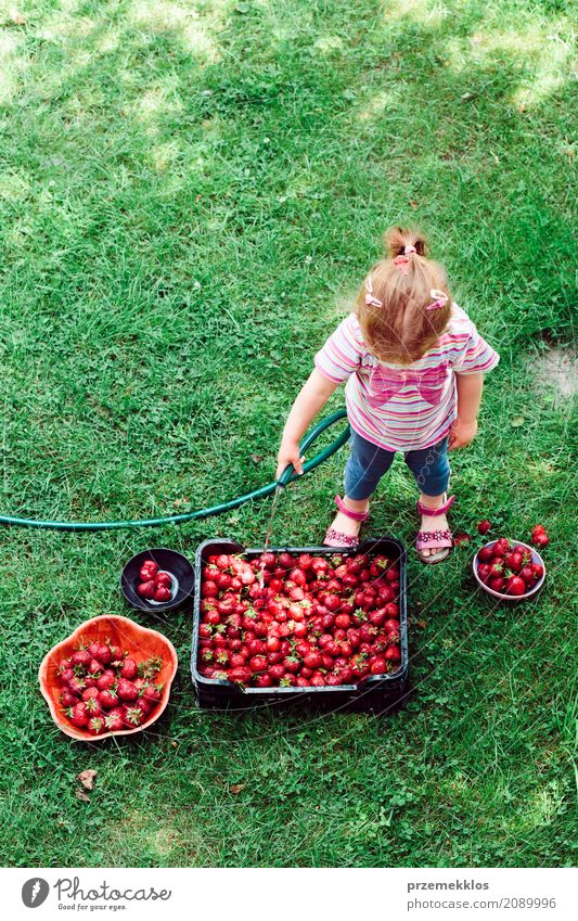 Little girl washing strawberries freshly picked in a garden Human being Child Nature Summer Green Red Girl Natural Family & Relations Garden Above Fruit Fresh