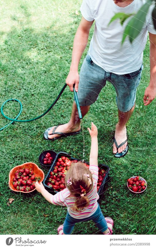 Siblings washing strawberries freshly picked in a garden Fruit Summer Garden Child Girl Boy (child) Family & Relations 2 Human being Nature Fresh Natural Above