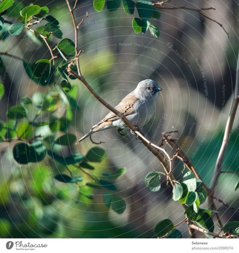 Nature Plant Summer Tree Animal Leaf Far-off places Environment Natural Small Garden Freedom Bird Trip Park