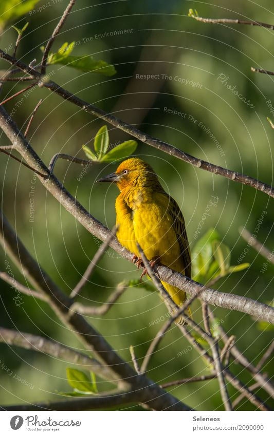 in the golden light Far-off places Freedom Environment Nature Spring Beautiful weather Plant Tree Leaf Garden Park Animal Wild animal Bird Animal face