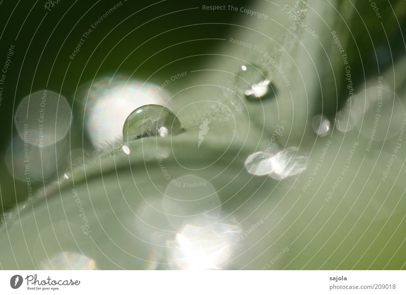 Nature Water Plant Leaf Bright Glittering Wet Drops of water Esthetic Drop Illuminate Damp Dew Elements Macro (Extreme close-up) Leaf green