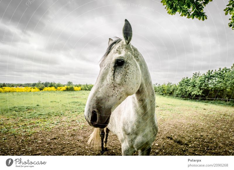Horse close-up on a field in cloudy weather Beautiful Face Summer Sports Nature Landscape Animal Sky Clouds Tree Grass Meadow Pet Wood To feed Blue Brown Green