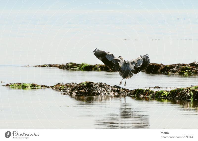 Nature Water Ocean Blue Animal Movement Landscape Contentment Bird Coast Elegant Environment Flying Free Esthetic Wing