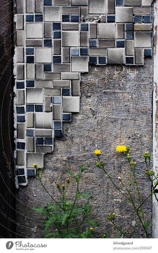 Green Blue Plant Yellow Blossom Gray Stone Wall (barrier) Brown Metal Concrete Growth Gloomy Broken Tile Derelict
