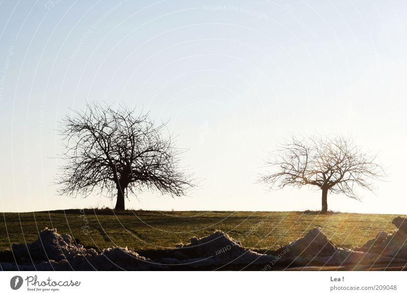 Sky Tree Winter Far-off places Cold Snow Meadow Landscape Field Beautiful weather Bleak Blue sky Melt