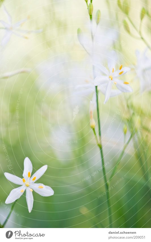 White Green Plant Summer Blossom Grass Spring Bright Delicate Stalk Graceful Copy Space