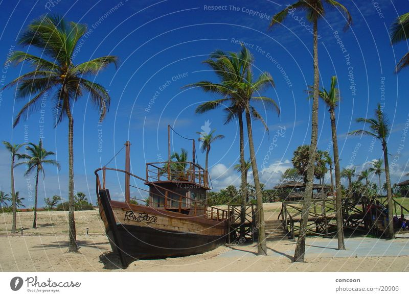 Sun Summer Beach Calm Happy Warmth Watercraft Physics India Palm tree Blue sky Goa