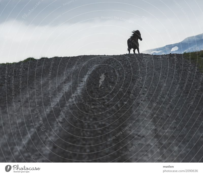 Nature Blue Landscape Animal Clouds Mountain Gray Horse Running Iceland Mane Ski piste Gallop