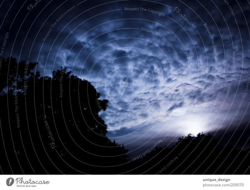 Sky Tree Blue Black Clouds Dark Environment Night sky Moon Eerie Night shot Low-key Moonlight Clouds in the sky