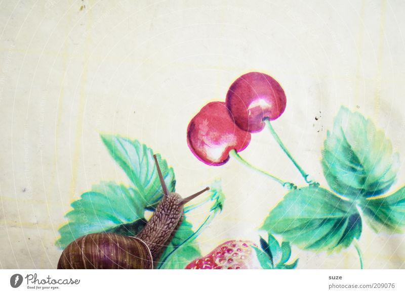 Nutrition Animal Movement Funny Fruit Time Table Appetite Snail Feeler Cherry Crawl Slowly Slimy Snail shell