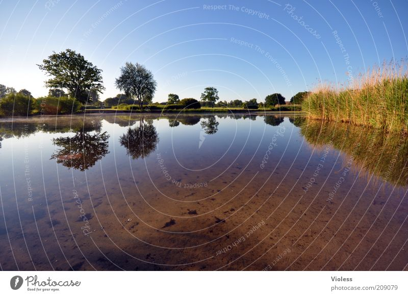 Nature Water Tree Plant Summer Calm Park Landscape Earth Idyll Common Reed Lakeside Beautiful weather Mirror image Blue sky