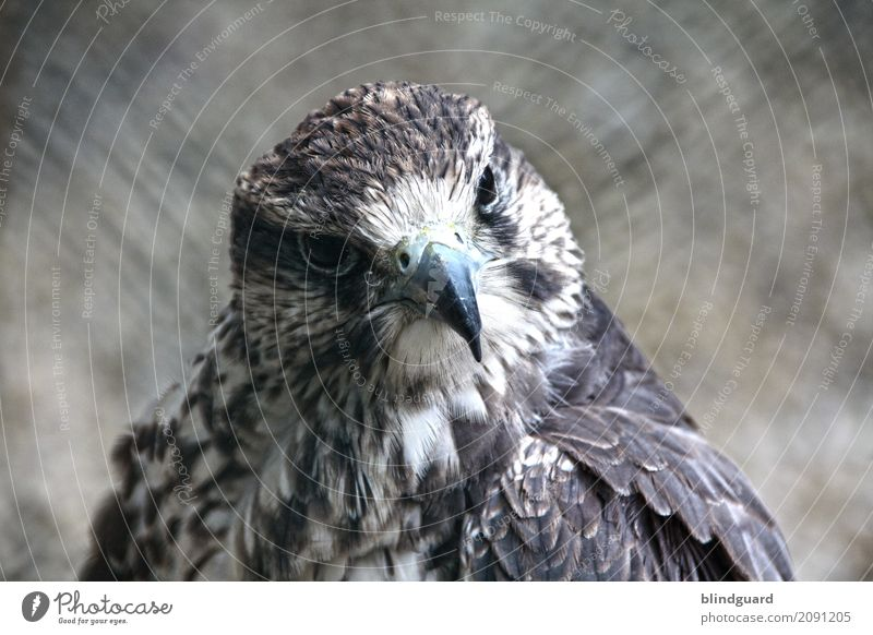 White Animal Black Freedom Gray Brown Bird Contentment Elegant Esthetic Power Feather Observe Friendliness Self-confident Animal face