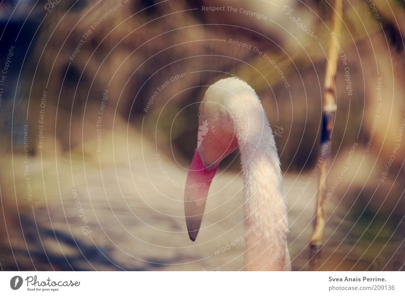 Loneliness. Summer Animal Bird Pelican 1 Emotions Moody Pink Colour photo Subdued colour Exterior shot Deserted Looking back Looking away Beak Neck Rear view