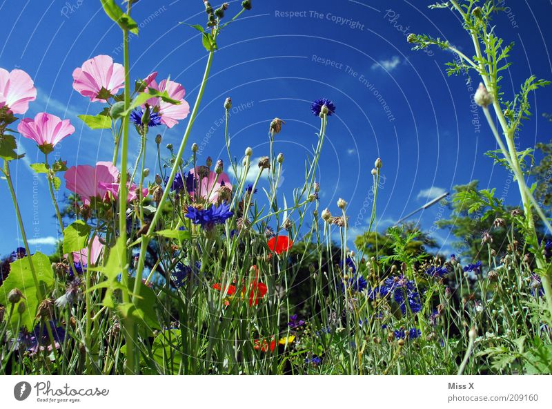 flower meadow Spring Summer Beautiful weather Plant Flower Blossom Meadow Blossoming Growth Fragrance Multicoloured Idyll Nature Calm Flower meadow Colour photo
