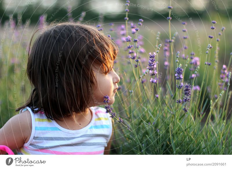 little girl in the lavender garden Lifestyle Joy Alternative medicine Wellness Harmonious Well-being Contentment Senses Relaxation Calm Meditation Fragrance