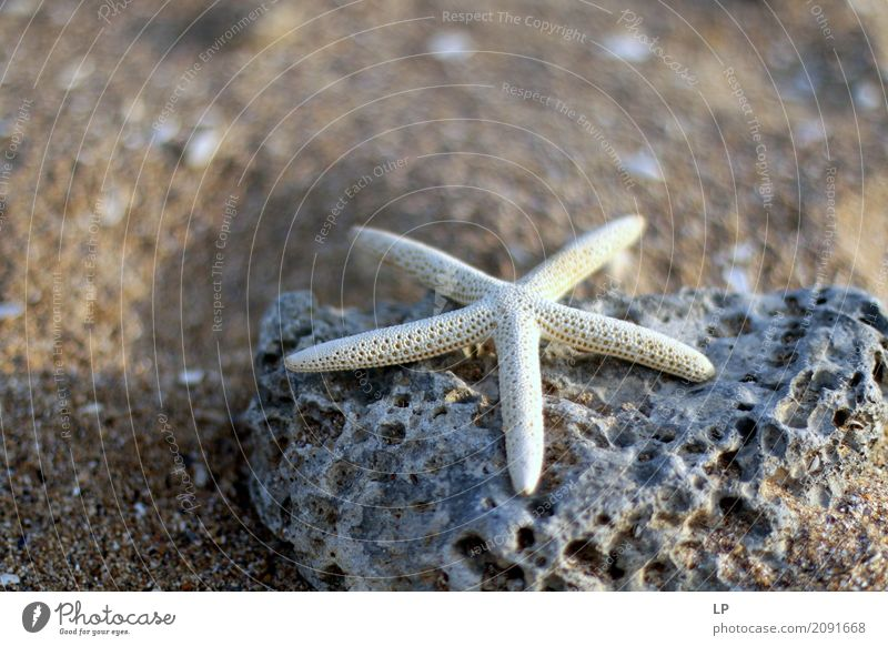 starfish on a rock Vacation & Travel Summer Ocean Relaxation Calm Joy Beach Life Lifestyle Emotions Background picture Stone Tourism Contentment Decoration