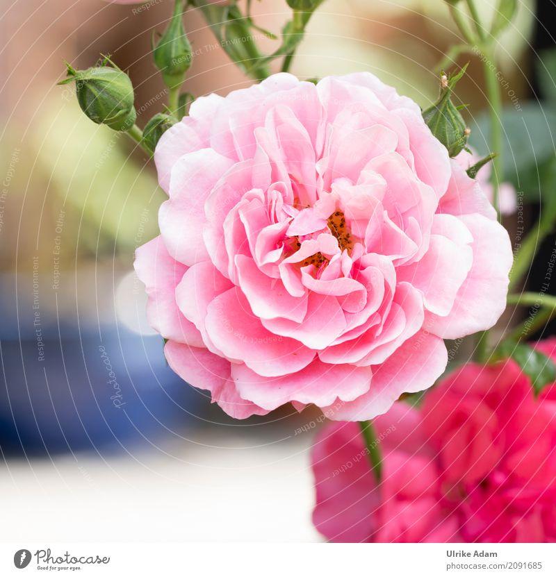 Nature Plant Summer Beautiful Flower Blossom Interior design Style Pink Design Park Decoration Elegant Blossoming Romance Wedding