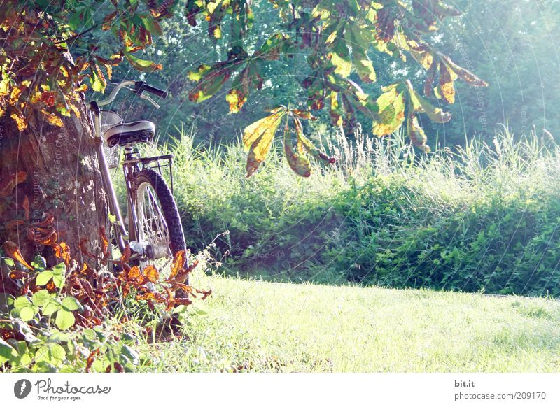 i want to ride my bicyclette Bicycle Nature Landscape Plant Sunlight Autumn Beautiful weather tree Grass bushes Meadow Contentment Autumnal colours
