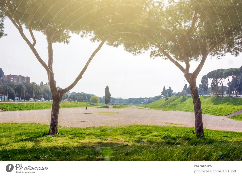 Circus Maximus in Rome Environment Landscape Plant Garden Park Italy Tourist Attraction Landmark Monument circus maximus Wood Old Town Vacation & Travel
