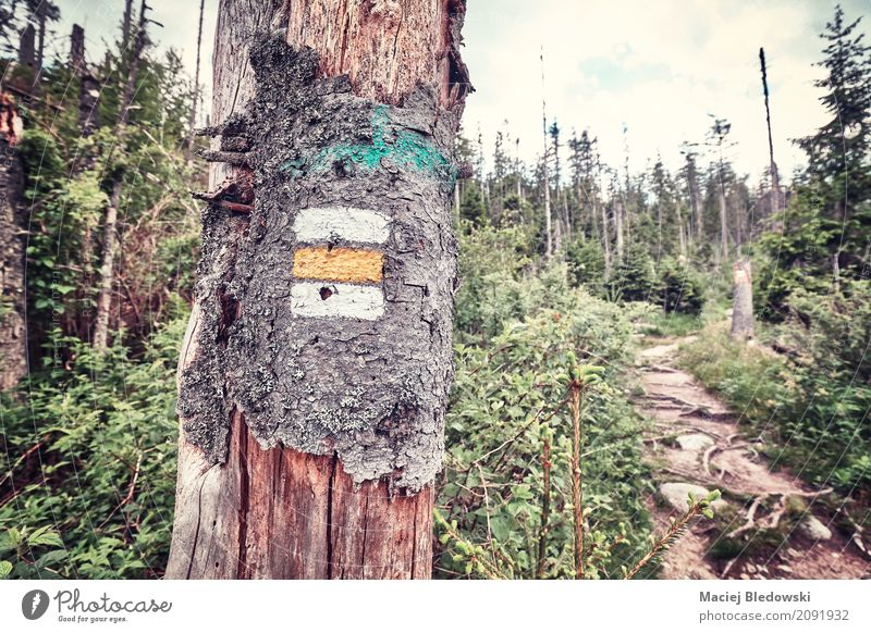 Mountain Trail. Nature Vacation & Travel Tree Forest Lanes & trails Tourism Rain Trip Hiking Adventure Symbols and metaphors Summer vacation Camping Orientation