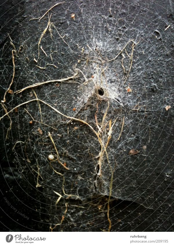 time traces Nature Plant Moss Hollow Opening Natural Spider's web Organic Colour photo Exterior shot Deserted Central perspective Cobwebby Wall (building) Trap