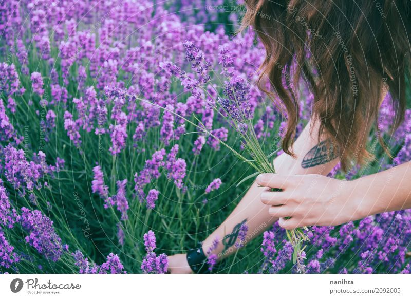 Young woman harvesting lavender Lifestyle Fragrance Human being Feminine Youth (Young adults) 1 18 - 30 years Adults Environment Nature Plant Flower