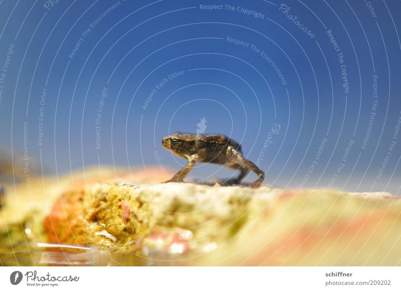 Loneliness Animal Funny Small Stand Friendliness Frog Blue sky Sympathy Frogs Diminutive Baby animal