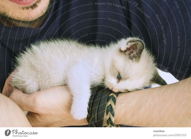 Little kitty tired and lying down over a man's arm Human being Masculine Young man Youth (Young adults) 1 18 - 30 years Adults Animal Pet Cat Baby animal Lie