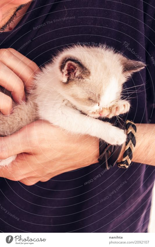 Young man holding a baby cat with his hands Cat Human being Youth (Young adults) Beautiful Animal 18 - 30 years Baby animal Adults Lifestyle Love Natural Small